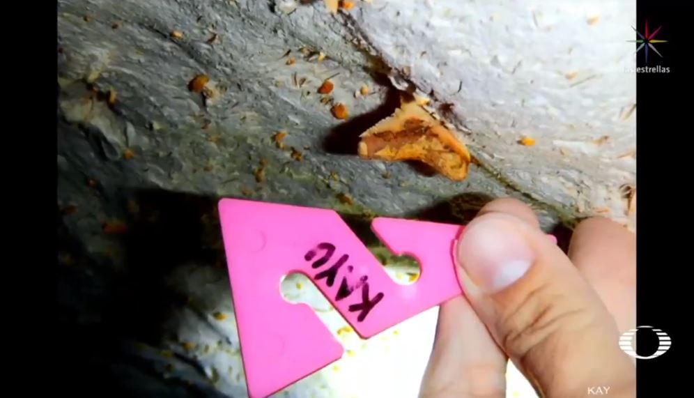 IMAGEN Hallan restos de un megalodón en Yucatán