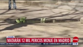 FOTO: Matarán 12 mil pericos Madrid