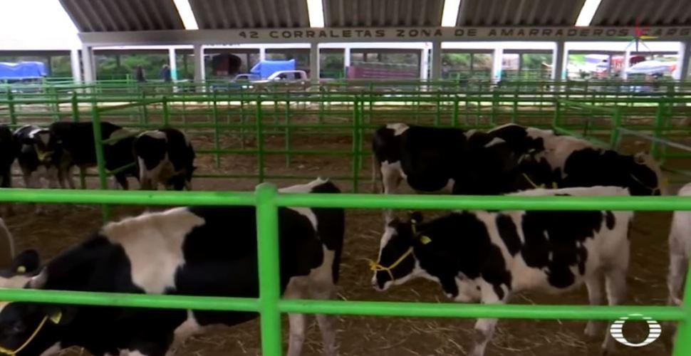 IMAGEN Mercado San Bernabé principal centro de intercambio ganadero