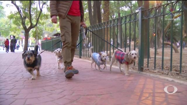 FOTO: México es declarado libre de rabia humada transmitida por perros, 13 noviembre 2019