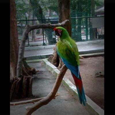 Reportan la muerte de varios animales en el zoológico de Veracruz