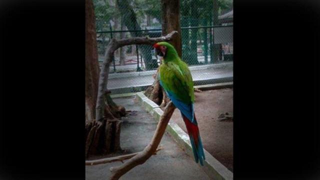 Foto: Mueren varios animales el zoológico de Veracruz