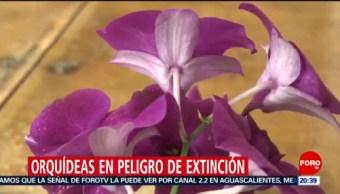 Foto: Orquídeas Endémicas Peligro Extinción México 20 Noviembre 2019