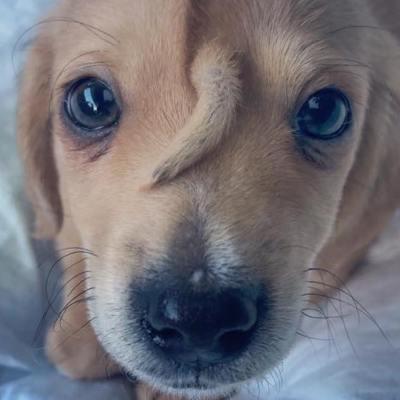 Abandonan a perrito porque nació con una cola en la cabeza