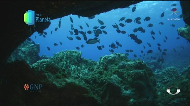 Foto: Por El Planeta Especies Endémicas Rapa Nui 28 Noviembre 2019