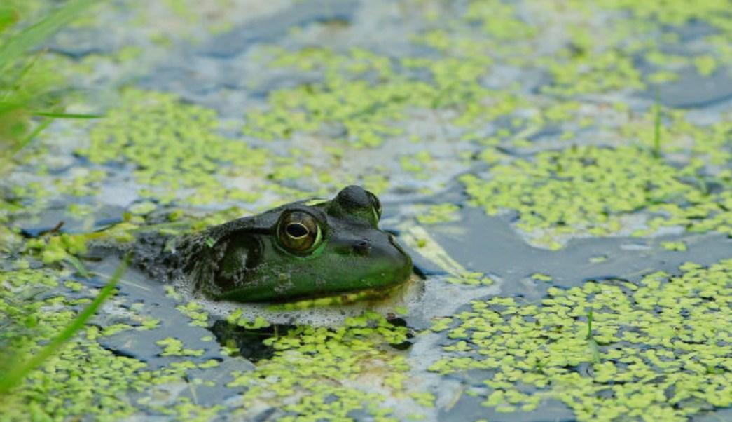 Foto: 7 especies invasoras causan daños en ecosistemas de América Latina. 5 Noviembre 2019