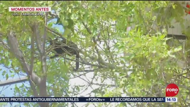 FOTO: Rescatan gato árbol CDMX