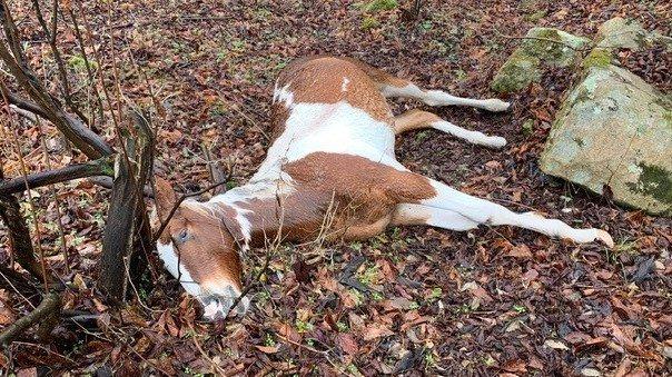 caballo muerto kentucky estados unidos