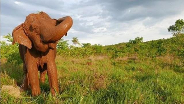 Foto: Muere elefanta de circo tras décadas de maltratos, 27 de diciembre de 2019, (Santuario de Elefantes de Brasil)