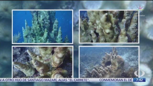 continuan afectaciones a los arrecifes de coral