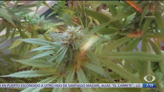el trafico de marihuana medicinal