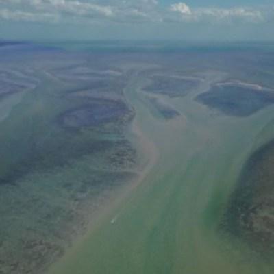 Reforestan manglares en Laguna de Términos, Campeche