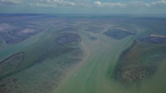 Imagen: La Laguna de Términos tiene una extensión de 705 mil 16 hectáreas, lo que la convierte en una de las áreas naturales protegida más grande de México
