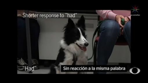 Foto: Perros Reconocen Palabras Humanos 12 Diciembre 2019