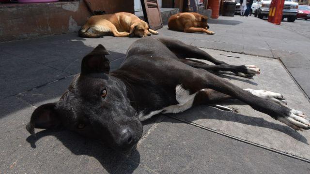 FOTO: Llaman a endurecer penas contra violencia y maltrato animal, el 26 de enero de 2020