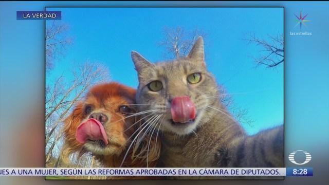 Manny el gato de las selfies