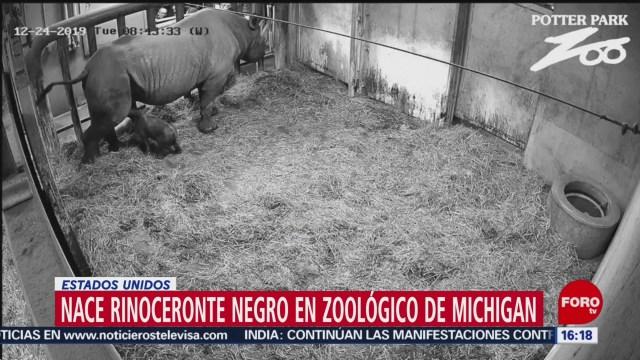 Foto: Nace Rinoceronte Bebé Negro Estados Unidos 27 Diciembre 2019