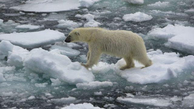 Calentamiento global afecta especialmente a los polos