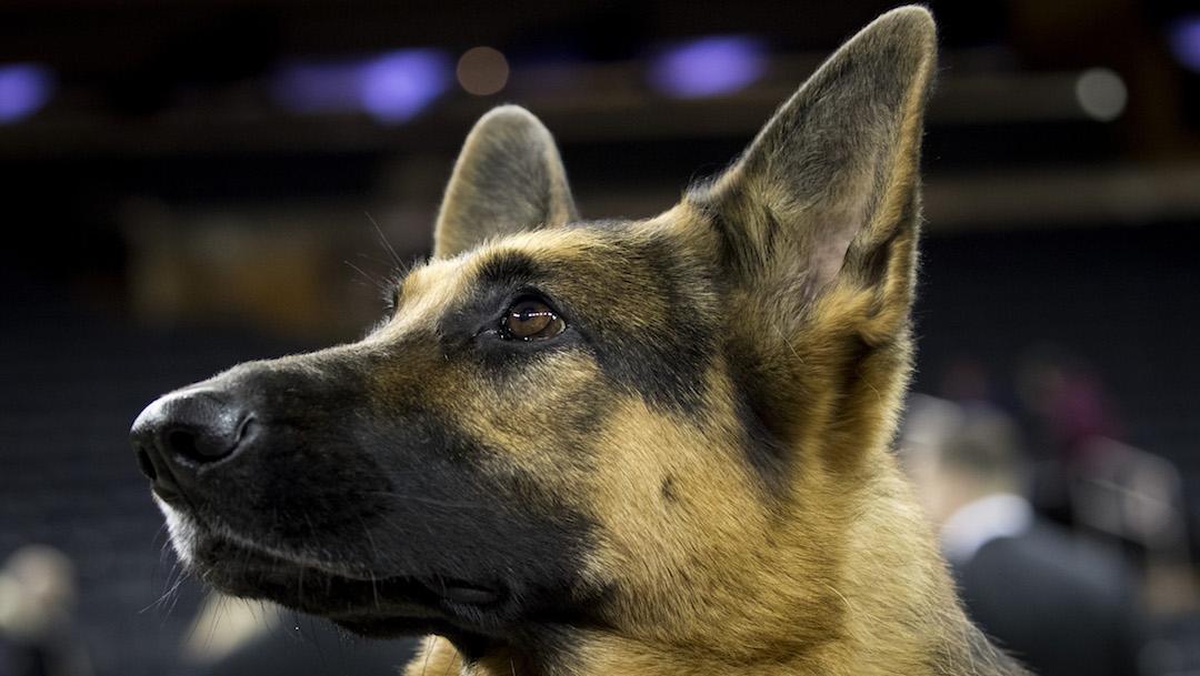Hombre descuartizó al perro de su expareja en venganza por ruptura amorosa