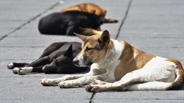 Algunos veterinarios temen perder su cédula profesional por la 'Ley Varela'.