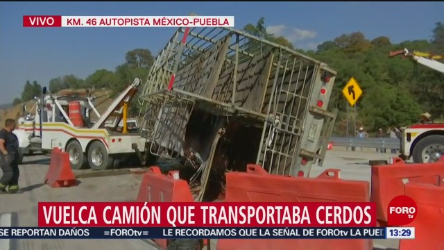 FOTO: Vuelca tráiler con cerdos autopista México-Puebla