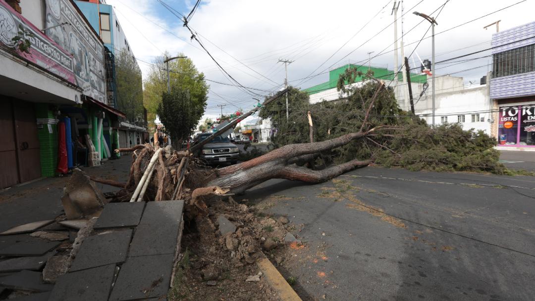 Foto: Fuertes vientos derriban árboles y anuncios espectaculares, 2 de enero de 2020 (CRISANTA ESPINOSA AGUILAR /CUARTOSCURO.COM)