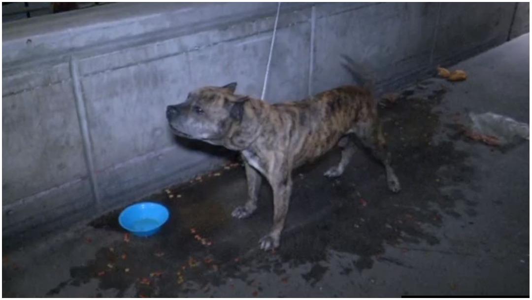 Foto: Un perro fue abandonado afuera de un supermercado, 4 de enero de 2019 (Foro TV)