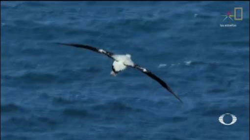 Foto: Albatros Caza Barcos Pesca Ilegal 28 Enero 2020
