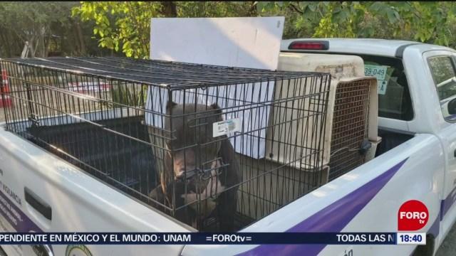 FOTO: aseguran a 13 perritos maltratados en nl