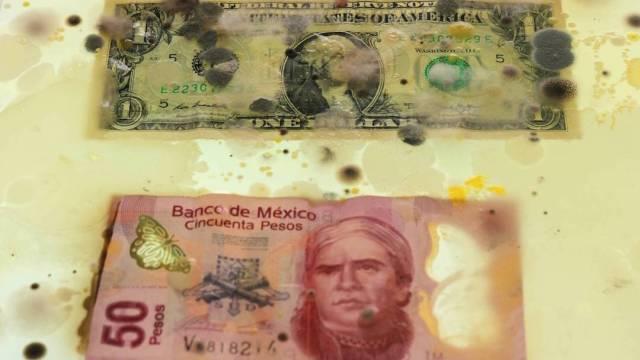 Billetes-germenes-dinero-bacterias-microorganismos
