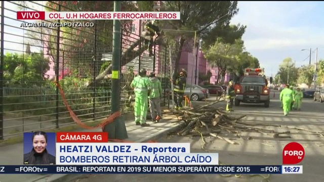 FOTO: 2 enero 2020, bomberos retiran arbol caido en azcapotzalco