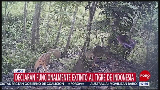 FOTO: 1 enero 2020, declaran funcionalmente extintos a los tigres de indonesia