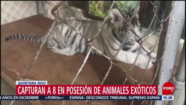 detienen a ocho sujetos por posesion de animales exoticos en quintana roo