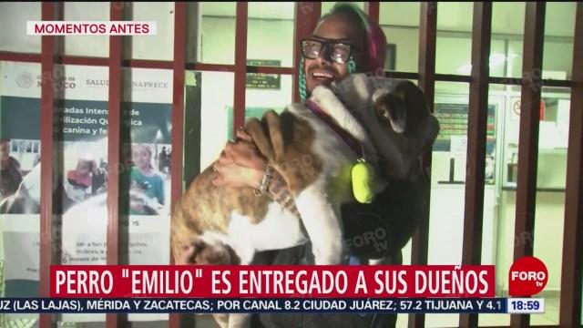 FOTO: emilio el bulldog secuestrado regresa con su dueno