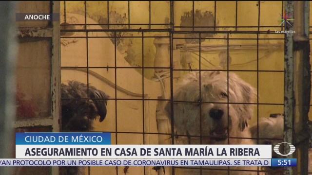 encuentran a decenas de perros en casa de santa maria la ribera en cdmx
