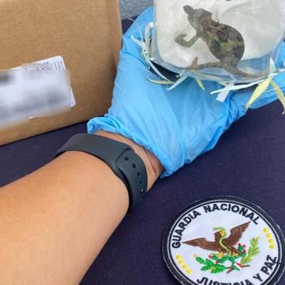 Foto: Ante este hecho, las especies fueron puestas a disposición de la Procuraduría Federal de Protección al Ambiente, donde se determinará su destino