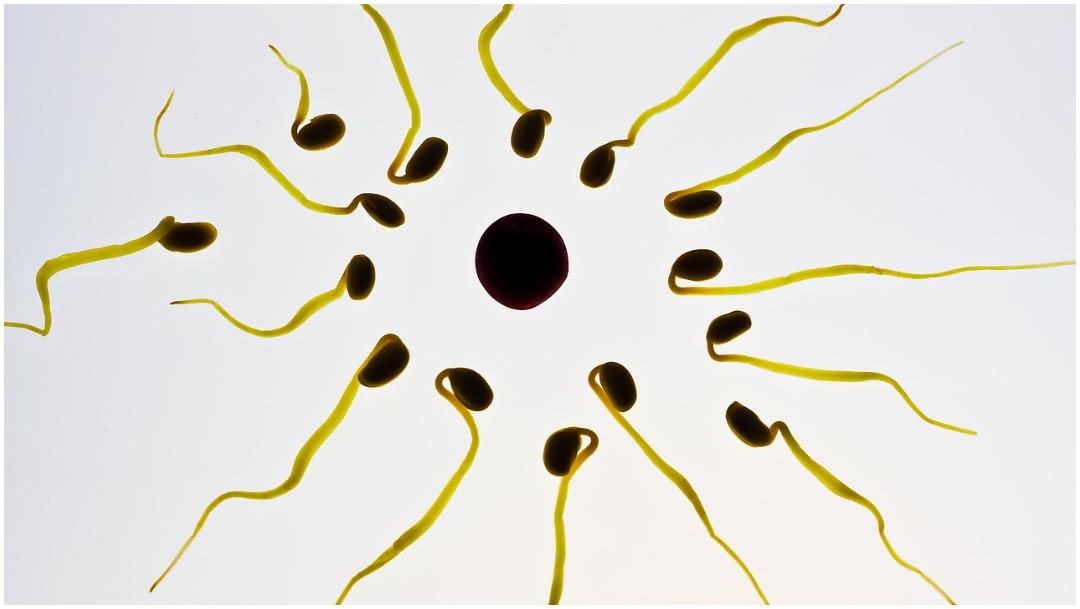 Imagen: Los óvulos y espermatozoides artificiales podrían ser una realidad este año, 18 de enero de 2020 (Pixabay)