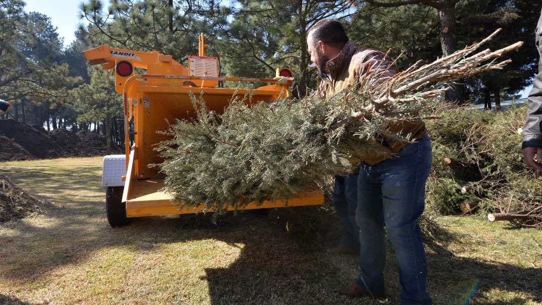 ¡No tires tu árbol de Navidad! Cámbialo por flores y plantas