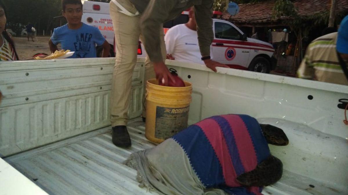 La Profepa informó que 292 tortugas murieron por intoxicación provocada por la marea roja en costas de Oaxaca