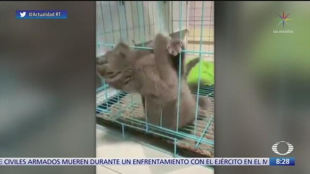 gatito se escapa de una jaula