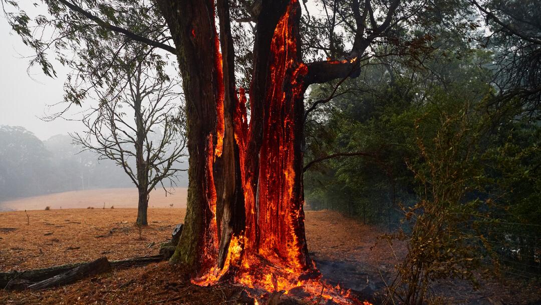 FOTO Detienen a 24 personas por provocar incendios forestales en Australia (Getty Images)
