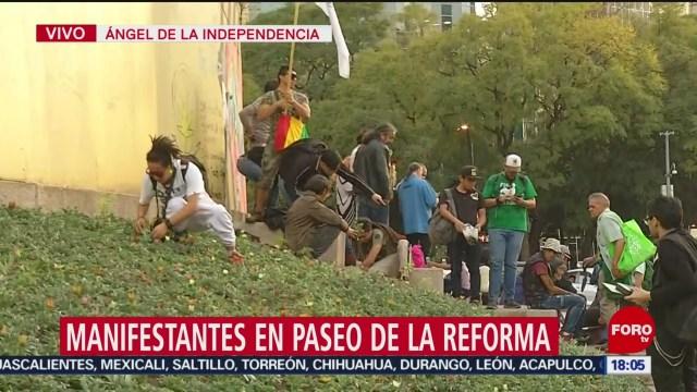 FOTO: manifestantes siembran marihuana en reforma