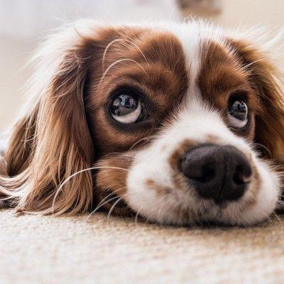 ¿Por qué los perritos no ladran igual en inglés que en español?