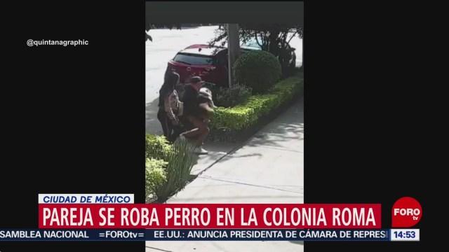 FOTO: pareja se roba a emilio un perro bulldog en la colonia roma