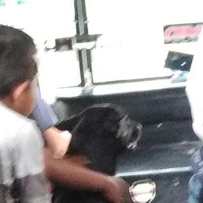 Chofer conmueve en redes y se viraliza por ayudar a niños y su perrito