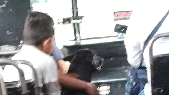 FOTO: Perrito sube a camión de pasajeros en Puebla, el 20 de enero de 2020