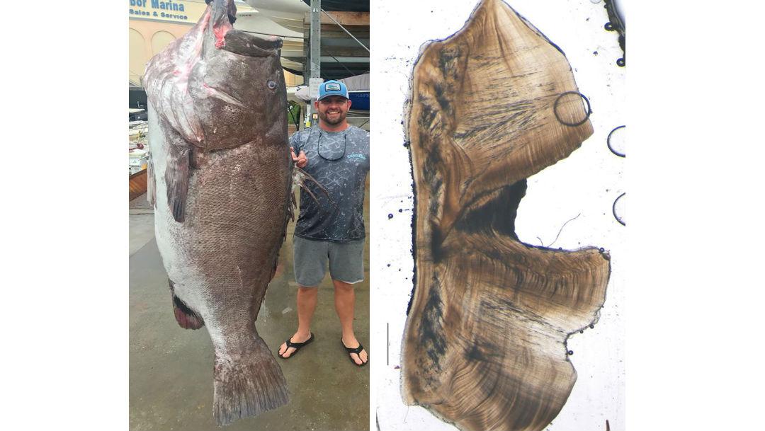 Pescó un monstruoso pez en extinción de 50 años y 160 kilos