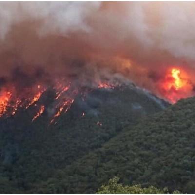 Pink donará 500 mil dólares para ayudar a combatir los incendios en Australia