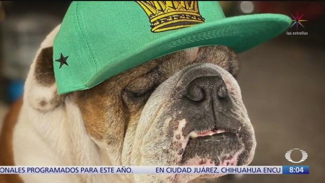 robo de mascotas en la ciudad de mexico