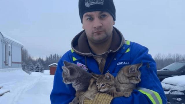 Foto Salva a tres gatitos de morir con ayuda de una taza de café 27 enero 2020
